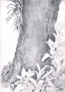 Pencil drawing of tree and plants Lauren Tarrant 2016 jpg smaller